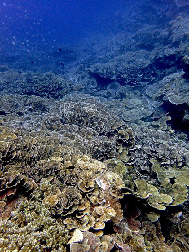 scleractinian coral-dominated community